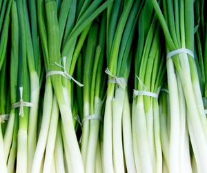 Green Chinese onion