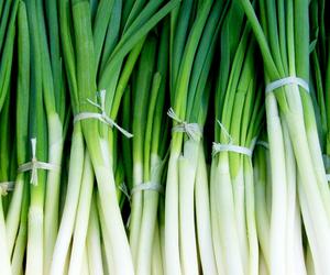 Green Chinese onion